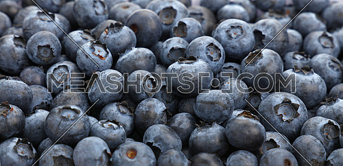 Fresh blueberry berries background pattern close up, low angle view