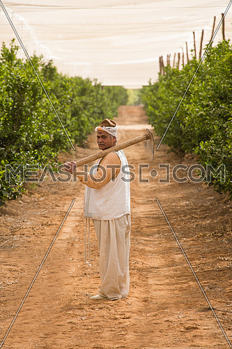 a male egyptian farmer walking between the trees holding axe