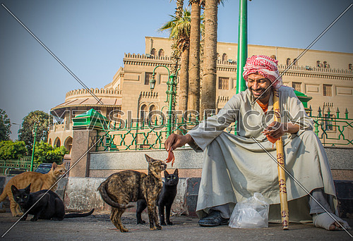 a poor man in the street feeding street cats