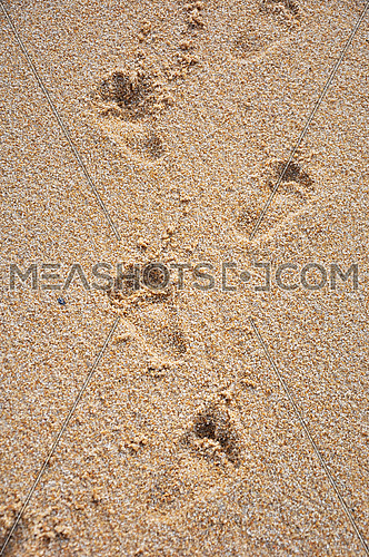 Close up child barefoot footprints on sand sea shore, high angle view, personal perspective