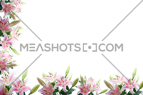 lily flowers composition frame over white copyspace