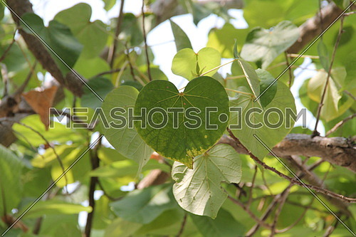 Close up on tree leaves