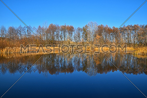 Orange and yellow autumn trees under clear blue sky with reflection in calm lake water surface, low angle view