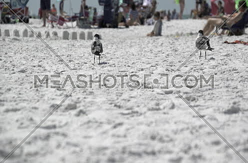 busy beach with people and birds