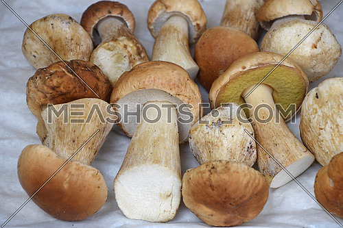 Close up brown porcini edible mushrooms (Boletus edulis, known as penny bun or cep) at retail display, high angle view