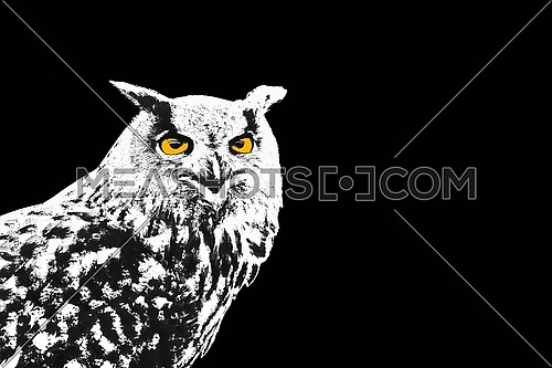 Black and white owl, Bubo Bubo, with yellow eyes on black background illustration
