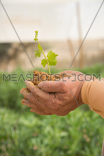 A close up on a farmer hand holding a plant in clay soil representing growth concept