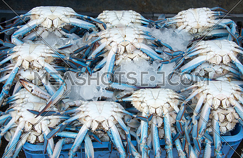 blue crab in fish market stall