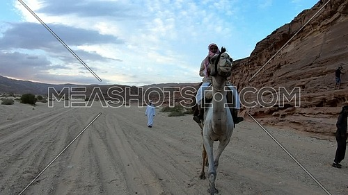 Follow shot for Bedouin man riding a camel Wadi Agarat in Sinai at day
