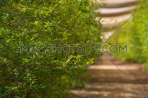 green bushes in an agricultural land