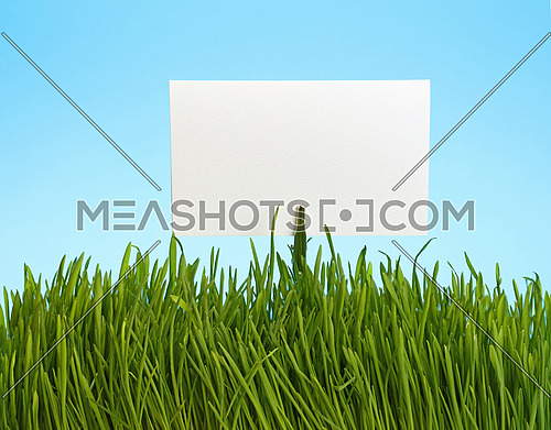 White paper sign in spring fresh green grass close up over background of clear blue sky
