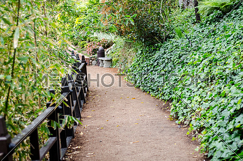 a passage way among a garden with trees, plants and flowers and a black wooden fence
