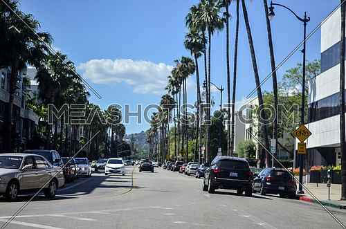 down town street with palm trees both sides