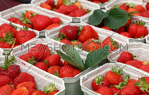 Close up red ripe fresh strawberry with green leaves in white cardboard paper crates on retail display of farmers market stall, high angle view