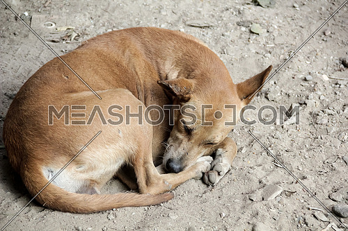 Close shot for a street dog sleeping on dirt.