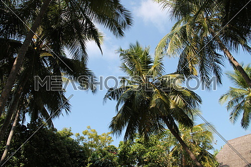 Maldives tropical nature & forests palm trees