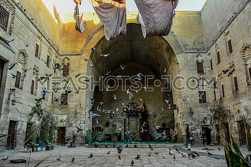 Long shot inside the The Khanqah of Baybars II Sharia Gamaliya in Cairo and Pigeons flying and other on the ground of Khanqah Yard