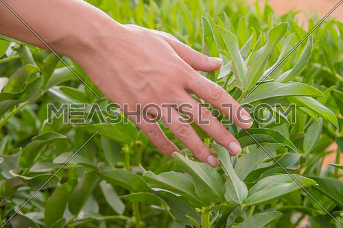 A female hand touching plants