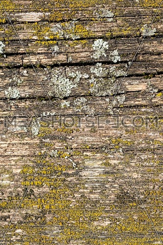 Wood tree cutting trunk backgrounds, natural cut stump wooden texture and timber patterns.