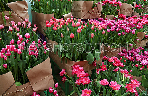 Close up tulip flowers wrapped with brown kraft paper for sale in greenhouse, high angle view