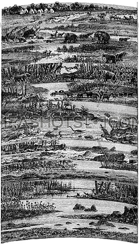Progressive developments flora and fauna successive ages of the earth, vintage engraved illustration. Earth before man – 1886.