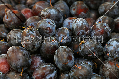 Heap of fresh ripe big blue plums close up at farmers market stall retail display, close up, low angle view