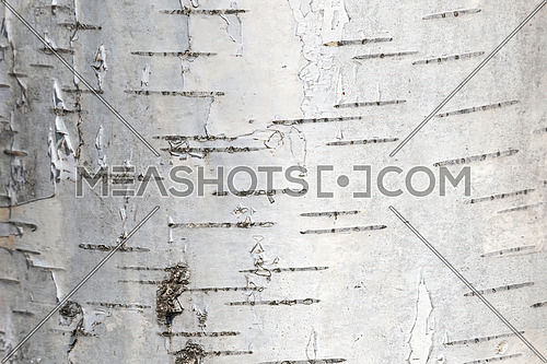 Empty plank wooden wall texture background.