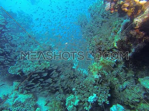 Underwater shot diving in Dahab in Egypt.