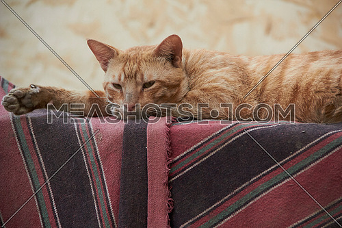Close up for an orange cat laying down on a colorfull mat at day.