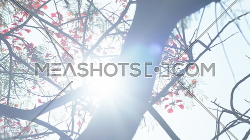 Close up for Tree leaves and Flowers with sun flare at day.