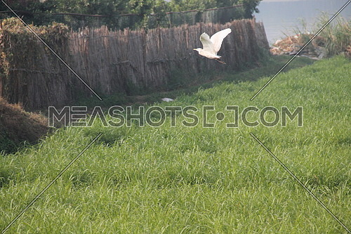 a photo for a cultivated land in rural area in Egypt showing a bird flying