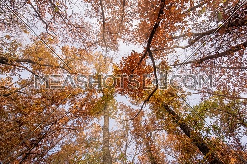 Autumn sunny landscape scene. Colourful autumn nature