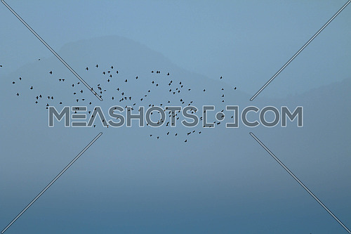 Inspirational background of a hazy sunset with a flock of starlings migrating in front of a barely visible mountain in blue tones