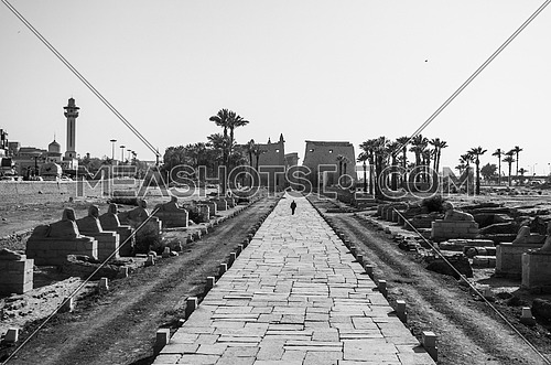 The Luxor  temple with a passage way leads to it decorated by small Sphinx on each side in Luxor city monochrome