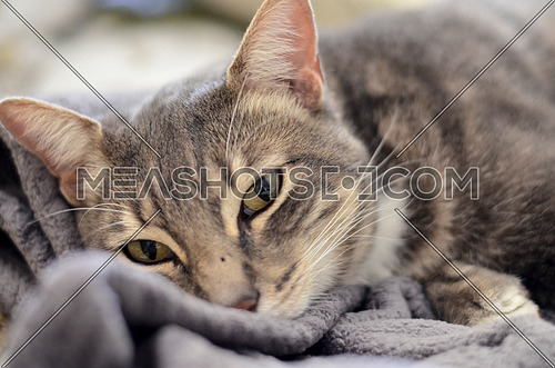A relaxed cat on a grey soft blanket