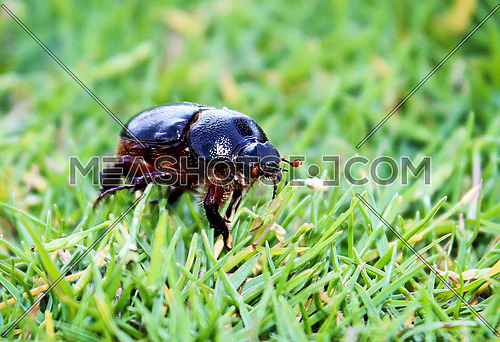 a beetle walking on grass