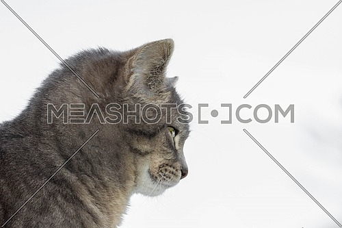 Side view of a cat isolated on white