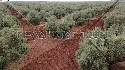 Air View field of olive trees near Jaen, Spain