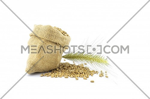 Fresh seeds spilling from a rustic hessian sack onto a white background with golden ears of grain and copy space