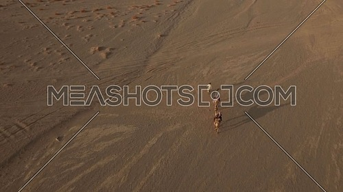 flying over Camels in Desert