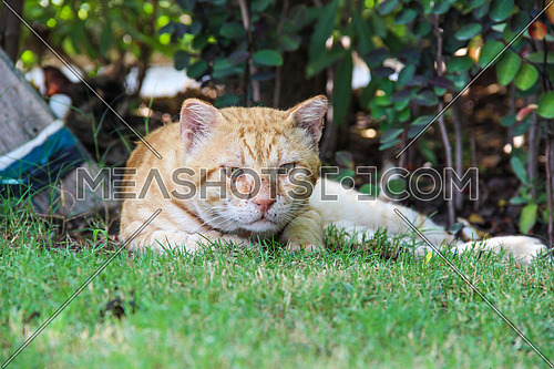 a cat with scratched face in a garden