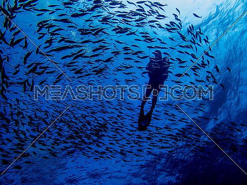 A scuba diver underwater surrounded by fish