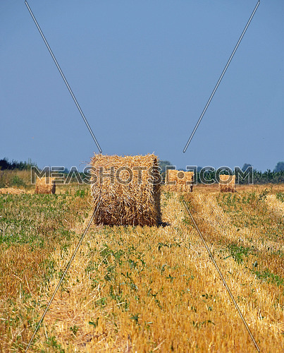 Yellow golden bales of hay straw in stubble field after harvesting season in agriculture, perspective to horizon
