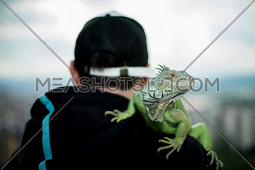 iguana resting on a man's shoulder