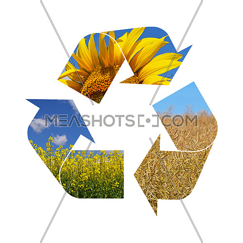 Illustration recycling symbol of agriculture crop, sunflower, rapeseed, isolated on white background