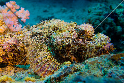 underwater shot in the red sea Egypt