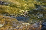Running colorful ripples on water surface in day time