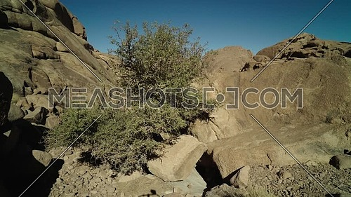 Reveal shot for a tree in a passage in Sinai Mountain at day.