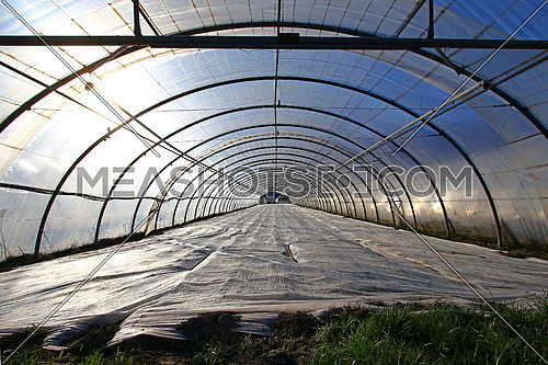 Sun through freshly planted greenhouse