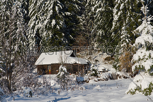 mountain house near pine tree forest, small cabin covered with fresh snow at sunny winter day
